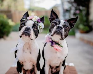 Two dogs social media marketing small business workshops